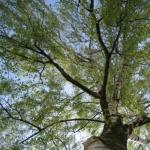 Eijkelkamp_Academy_bodem_voor_bomen_gallery.jpg