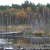 Conservation of Baltic raised bogs on Pomerania region