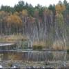 Консервация Балтийских выпуклых болот в регионе Померания