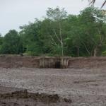 Eijkelkamp_mangrove_2.jpg