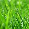 Een grashoogtemeter is een goed instument dat u helpt bij het plannen van het maaien en beweiden.
