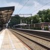 Monitoring effect of tunnel construction on tree stock at Driebergen-Zeist station